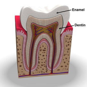Layers of Teeth